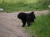 Dreadlockhunden var hur cool som helst.