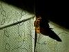 Min fjäril