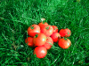 Inte alls onaturligt att man lägger sina tomater i en hög på gräset. Inte alls arrangerat, nej då.
