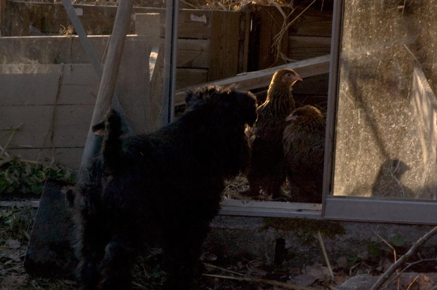Otto är nyfiken på tjejerna, men för dom är han bara i vägen för dörröppningen.