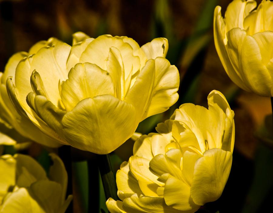 Blomsterlandet bilden i guldiga toner och klippt