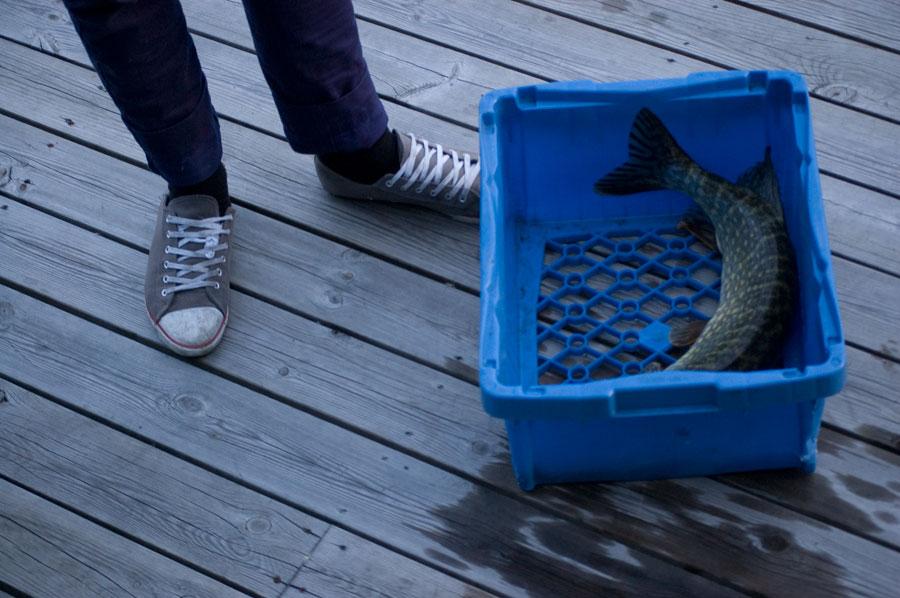 Helt sjukt stor fisk!! ..