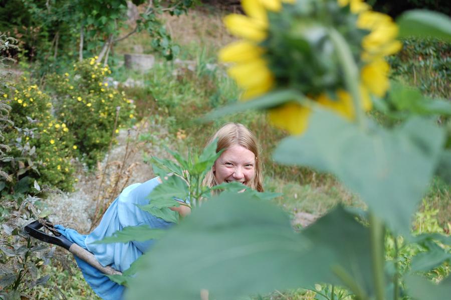 Solrosorna vakar över potatislandet jag sitter och gräver i