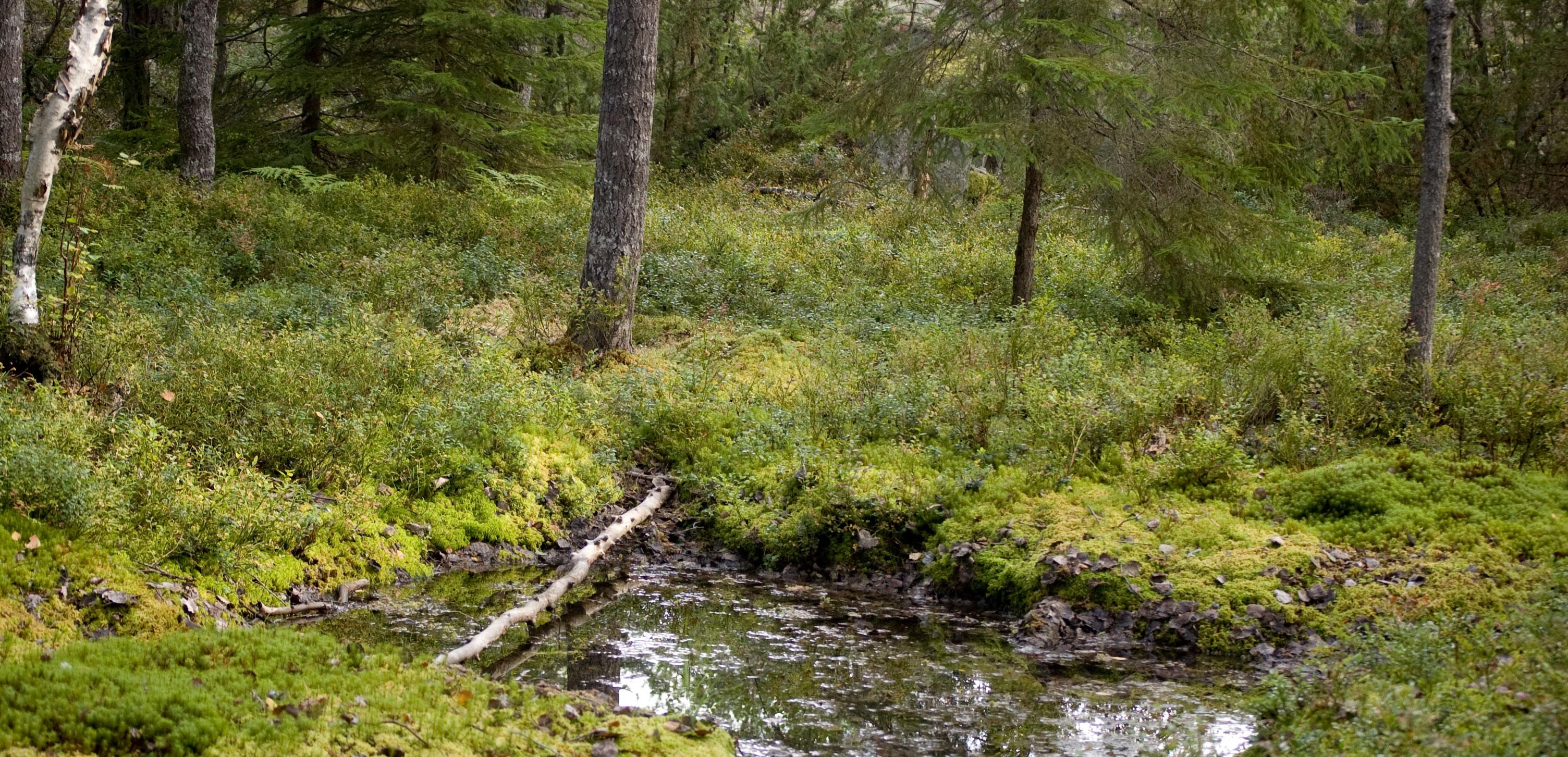 Skogen, på såna här ställen hittar man svamp